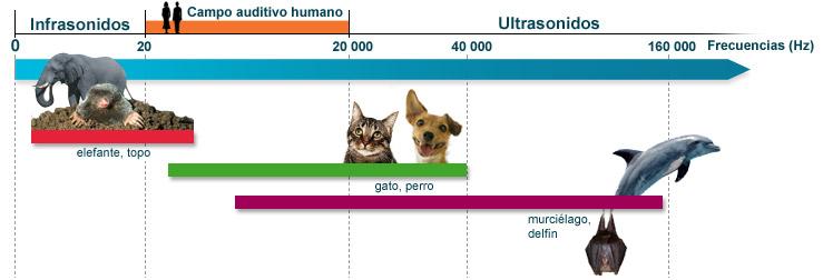 AUDICION EN ANIMALES PDF
