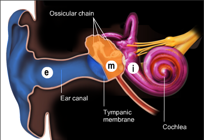 Ear middle ear cochlea cochlea diagram of the three parts of the ear external ear e middle ear m and inner ear i ccuart Images